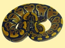 snakes_1