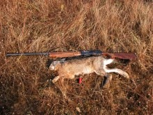 hare-hunting_2